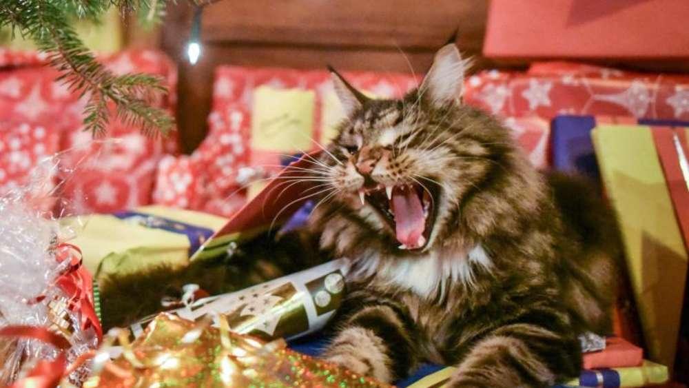 Bilder Weihnachten Tiere.Jeder Dritte Halter Beschenkt Sein Tier Zu Weihnachten Tiere