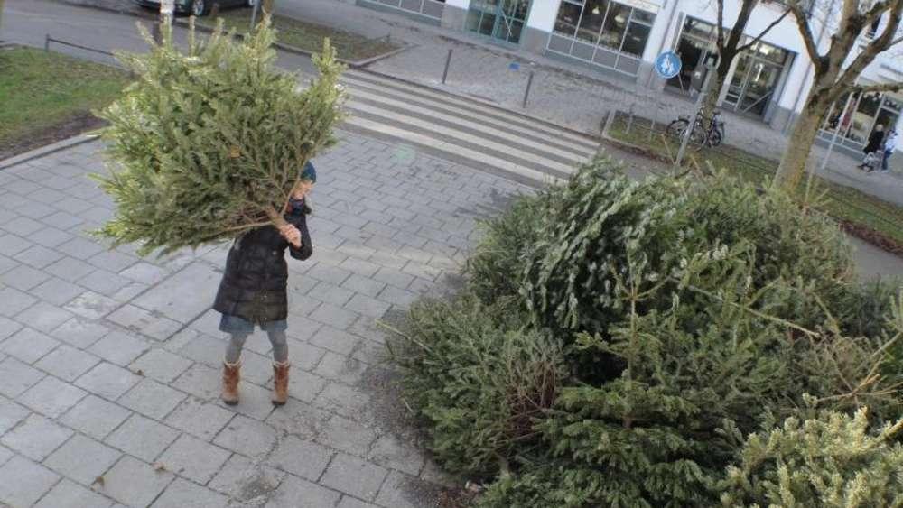 Weihnachtsbaum Fun.Nach Dem Fest Weihnachtsbaum Wird Schlafplatz Für Vögel Wohnen