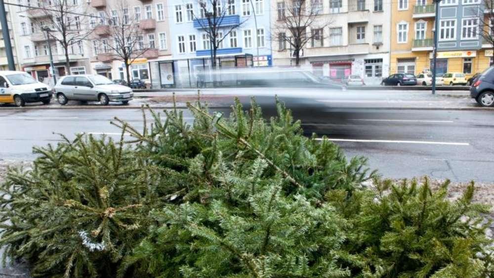 Weihnachtsbaum Ab Wann.Weihnachtsbäume Nicht Im Wald Entsorgen Leben