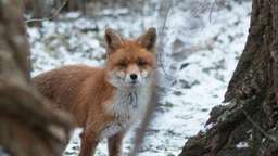 Wildtiere leiden unter strengem Winter