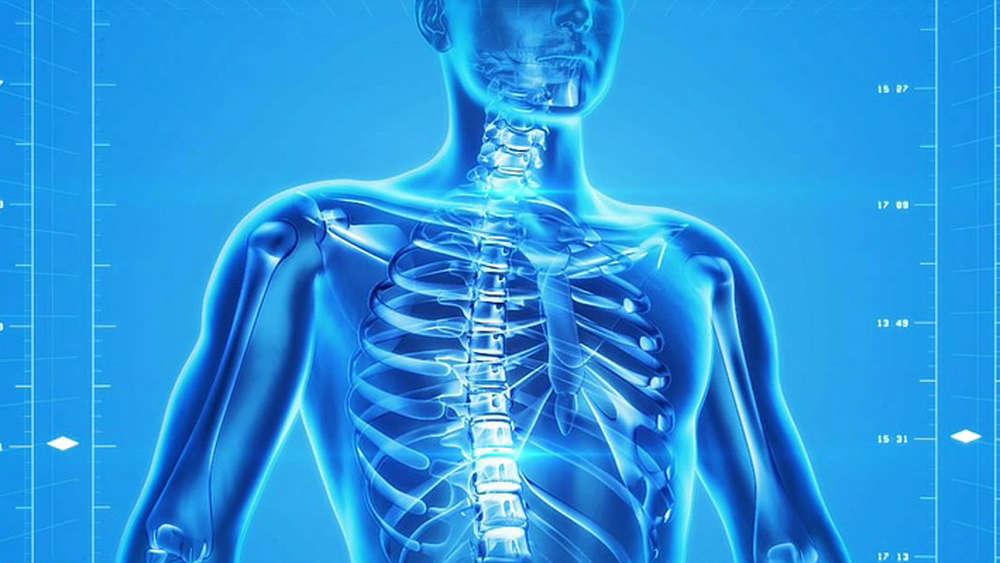 Berühmt Anatomie Der Knochen Im Menschlichen Körper Zeitgenössisch ...