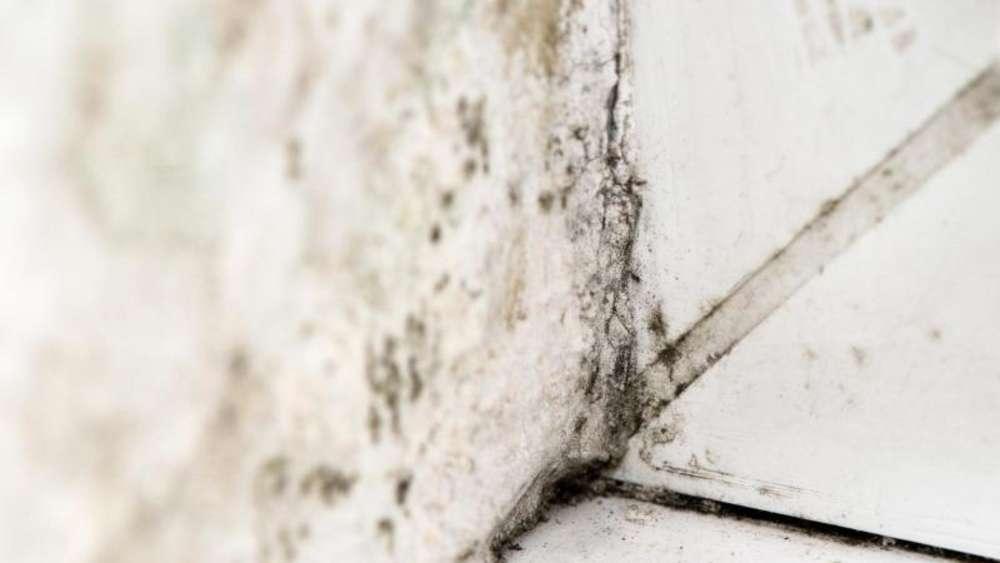 Dunkle Seite des Winters: Schimmel im Haus vorbeugen | Wohnen