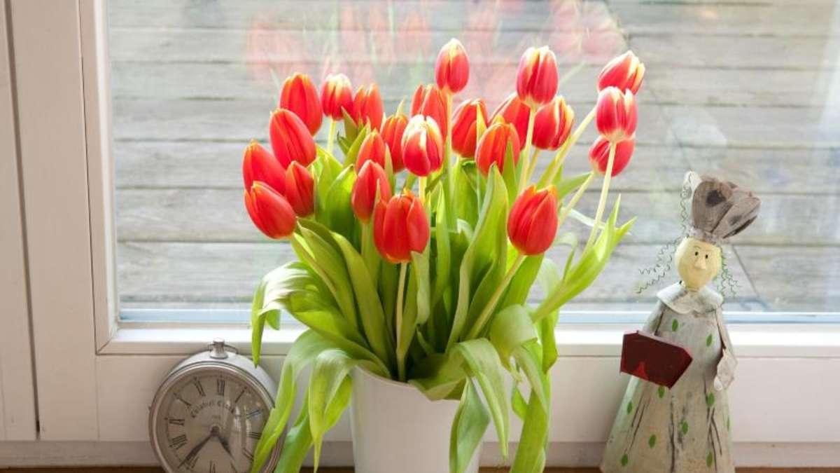l nger frisch pflegetipps f r tulpen in der vase wohnen. Black Bedroom Furniture Sets. Home Design Ideas
