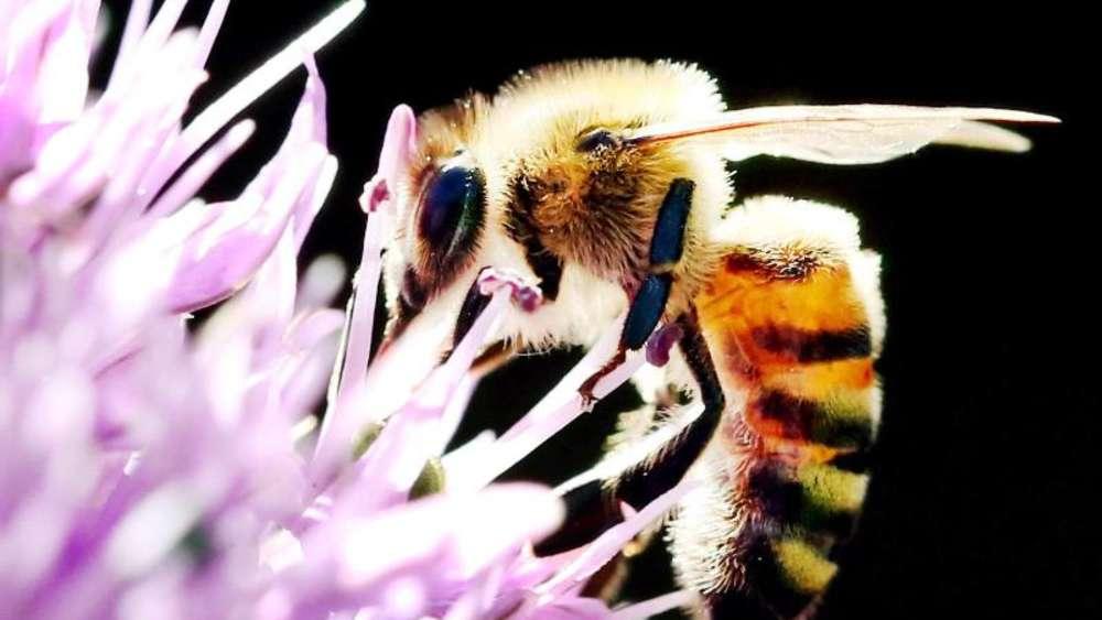 hilfe f r wildbienen ungef llte bl ten im garten bevorzugen wohnen. Black Bedroom Furniture Sets. Home Design Ideas