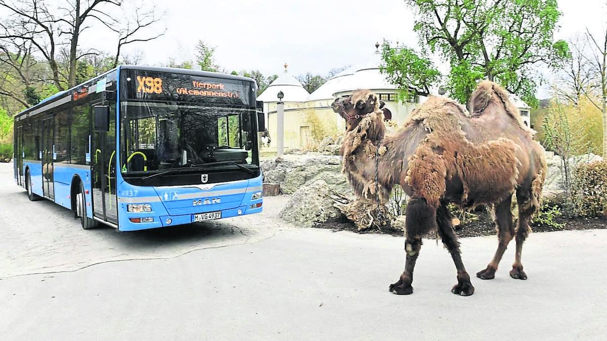 neue bus spiele