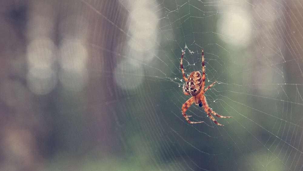 Spinnen vertreiben: Diese Hausmittel sagen ihnen den Kampf an   Wohnen