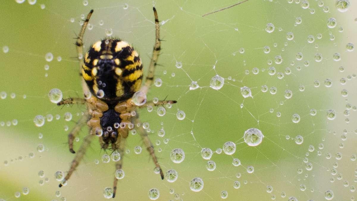 mit dieser pflanze bek mpfen sie spinnen in ihrer wohnung