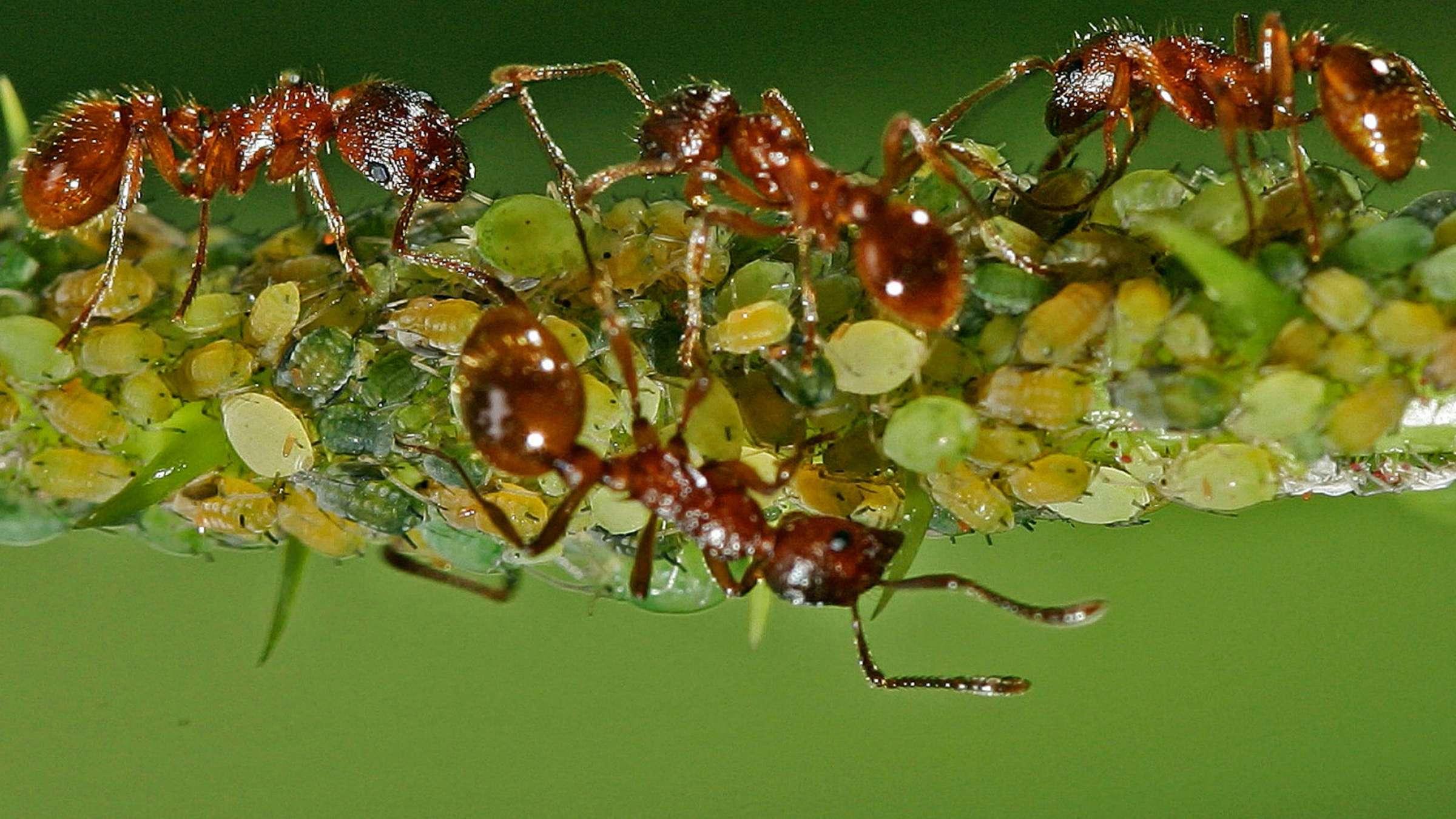 Was-tun-gegen-Ameisen-in-der-Wohnung | Wohnen