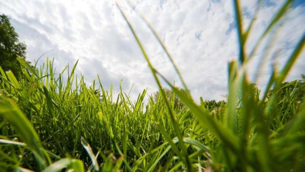 Neuer Rasen Braucht 14 Bis 25 Grad Zum Wachsen Wohnen