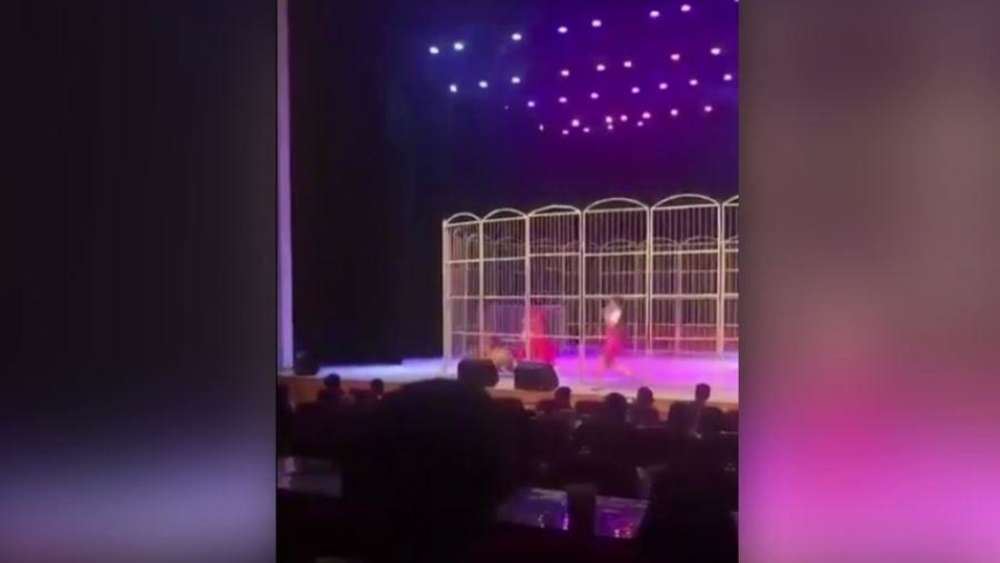 Dramatisches Video: In diesem Moment greift der Tiger den Dompteur in der Manege an.