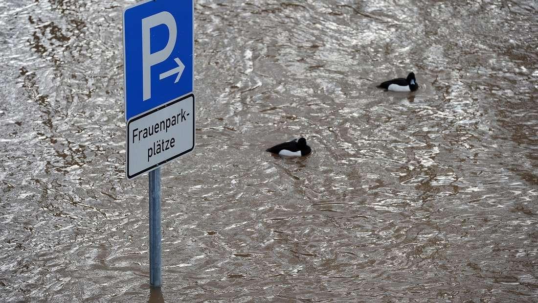 Dürfen Männer auf Frauenparkplätzen parken?