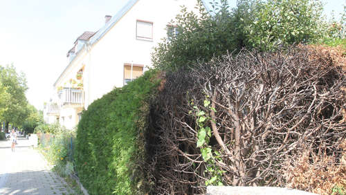 Hecke in Flammen: War es Brandstiftung?