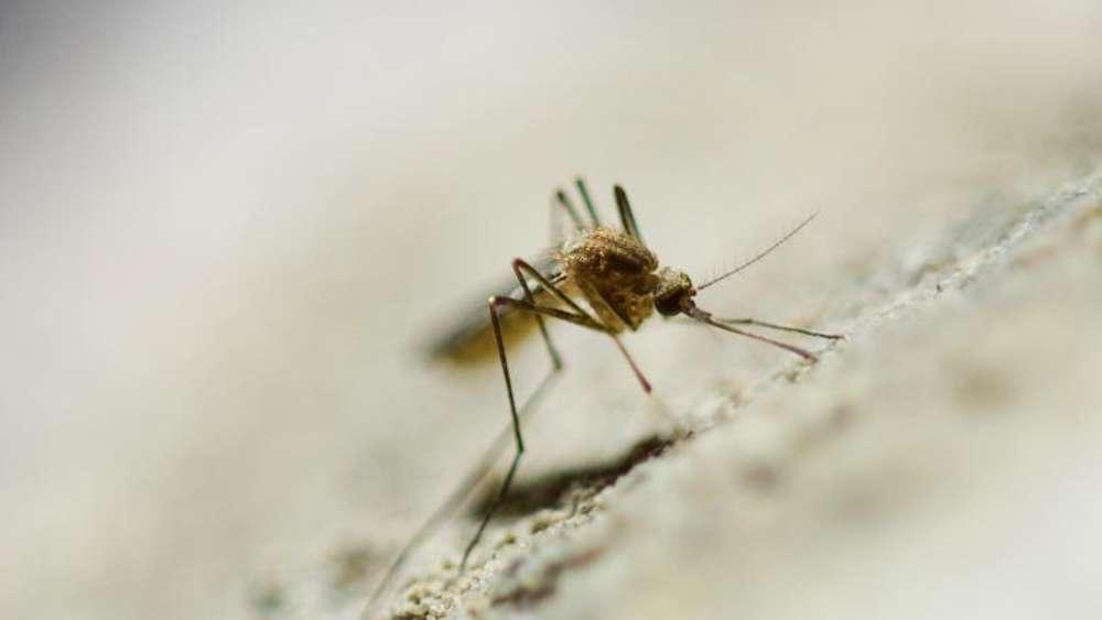 Nahender Herbst treibt Stechmücken ins Haus | Welt