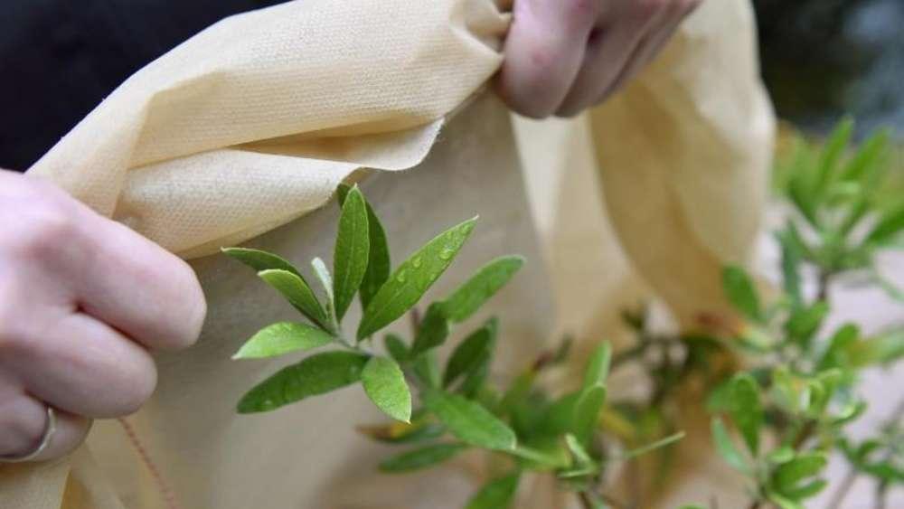 Müssen Alle Gartenpflanzen Im Winter Dick Eingepackt Werden? | Wohnen