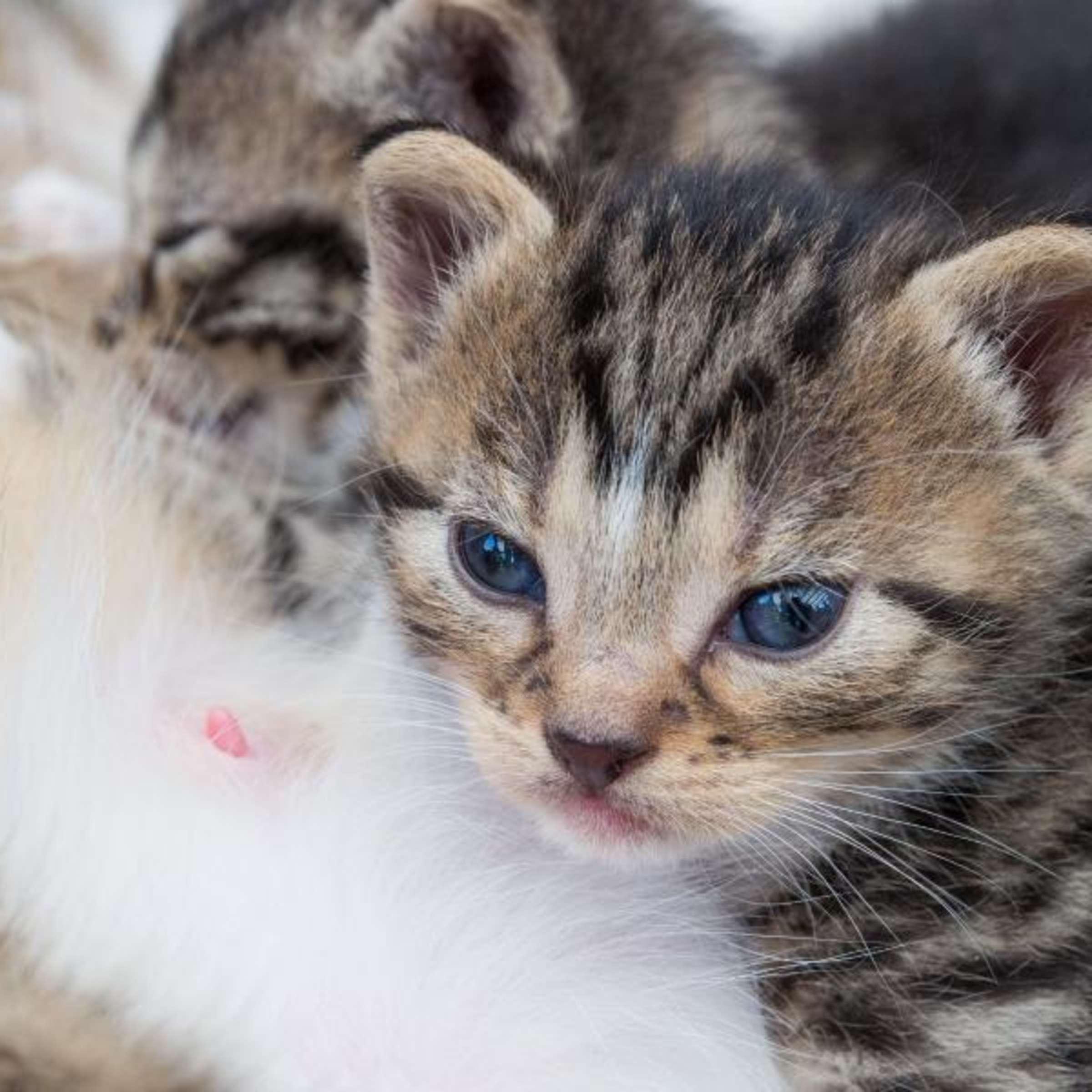 Gratis baby steiermark katzen Tiervermittlung