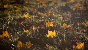 Stellen rasen gelbe Rasen wird