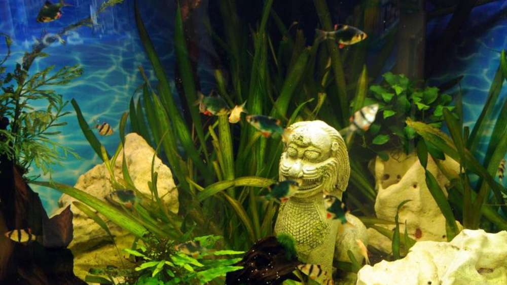 Auch Pflanzen Im Aquarium Brauchen Dunger Tiere