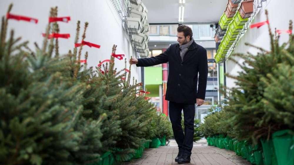 Weihnachtsbaum Im Topf Geschmückt.So überlebt Der Weihnachtsbaum Im Topf Leben
