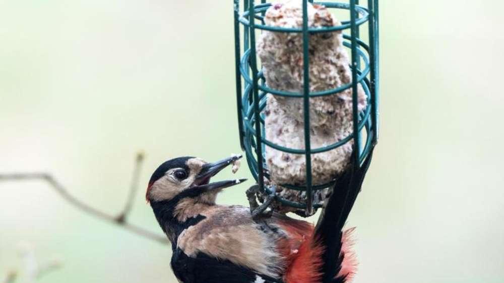 Vogel Im Winter Richtig Futtern Tiere