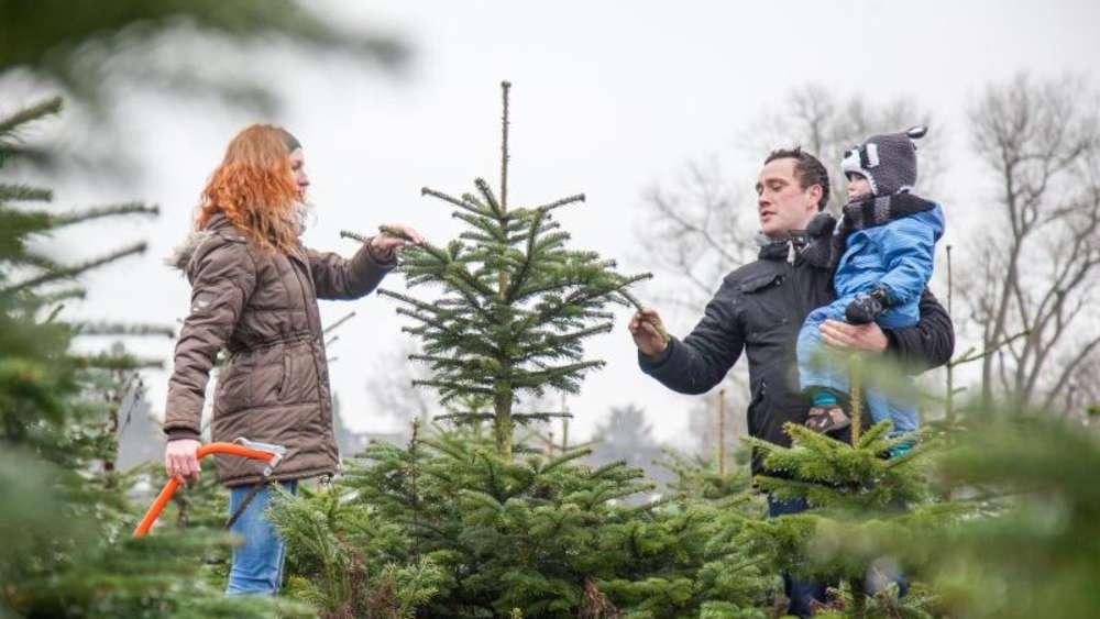 Weihnachtsbaum Selber Schlagen Sauerland.Mit Glühwein Zum Weihnachtsbaum Der Kauf Wird Zum Event Wohnen