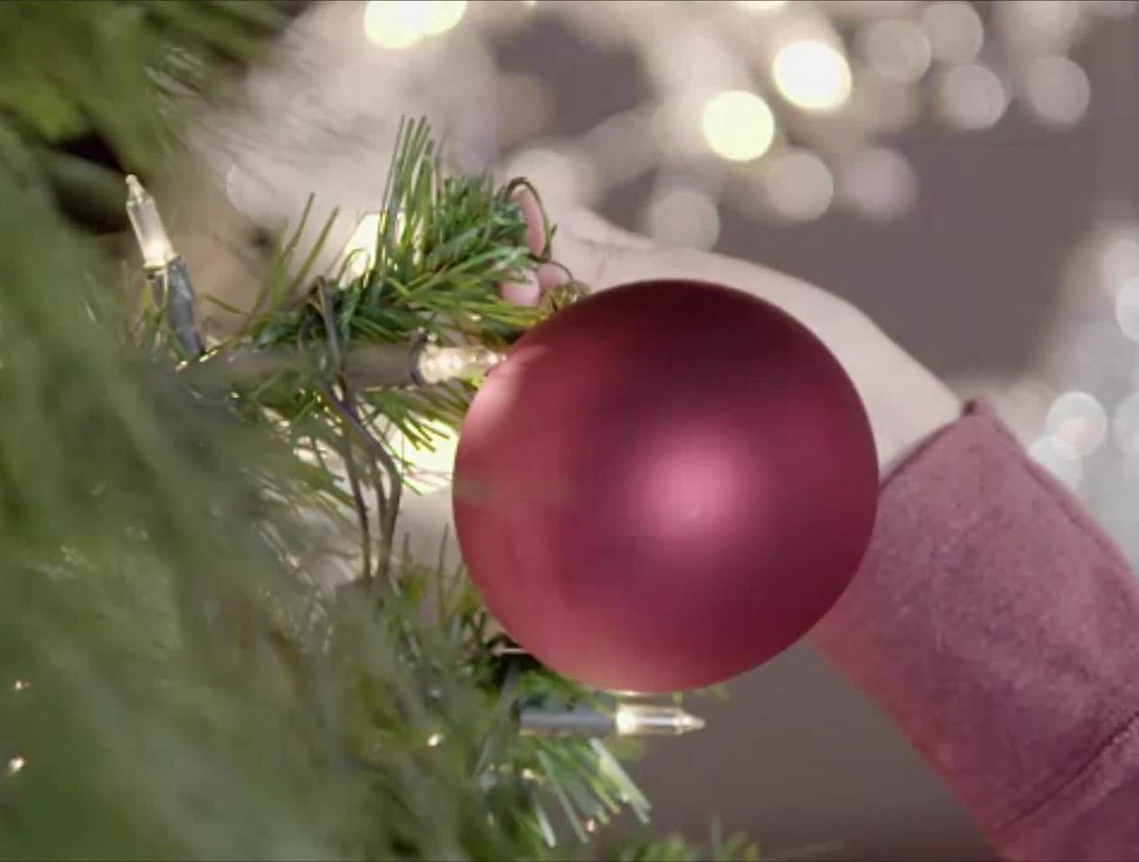 Weihnachtsbaum Explodiert.Das Ist Ekelhaft Diese Tiere Krabbeln Aus Ihrem Weihnachtsbaum Welt