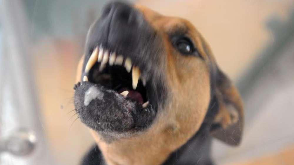 Gemeinsame Freude oder Angst? Körpersprache von Hunden richtig deuten | Tiere @SZ_58