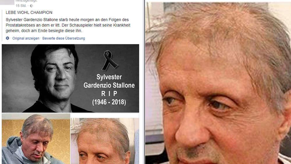 Sylvester Stallone gestorben? Schauspieler kommentiert