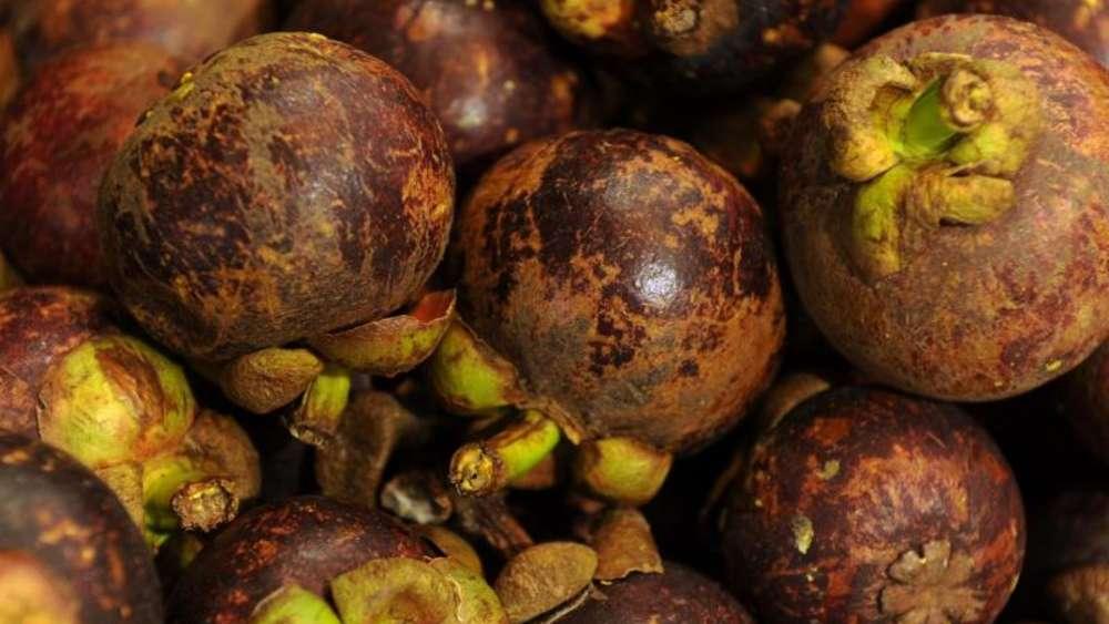 bei mangostane schmecken kleine exemplare intensiver - Schmcken Kleine Wohnkche
