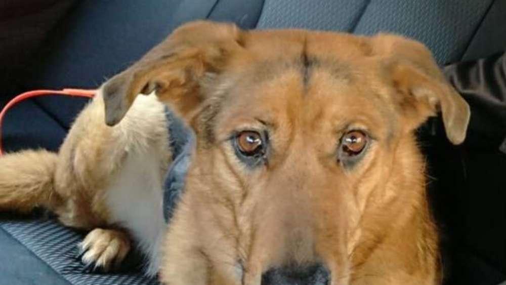 Rentner Vergisst Seinen Hund In Der Wohnung Dachau