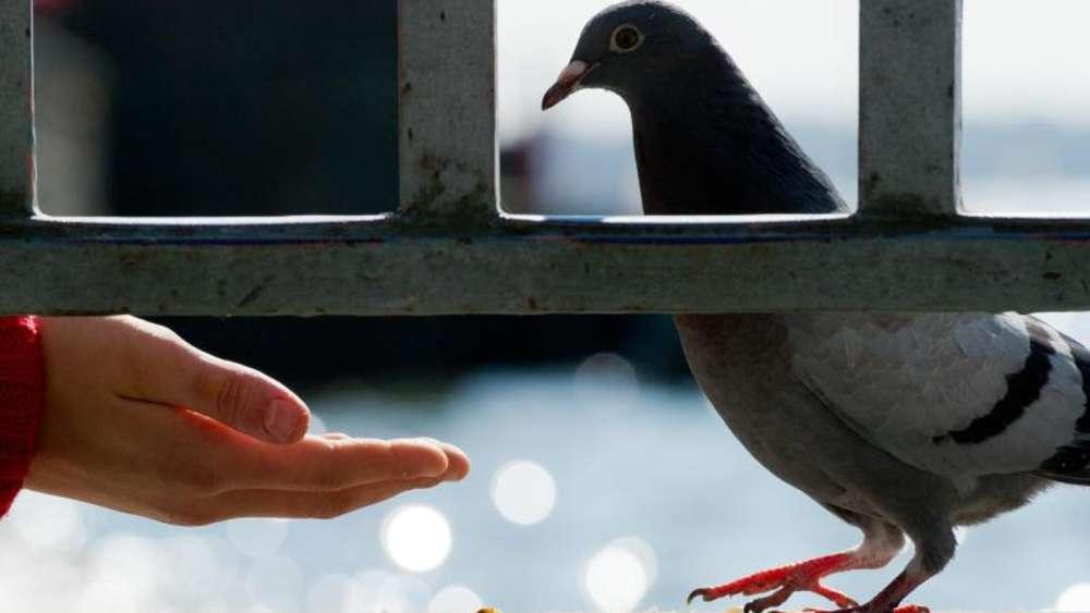 Ausserordentliche Kundigung Bei Regelmassigem Taubenfuttern Wohnen