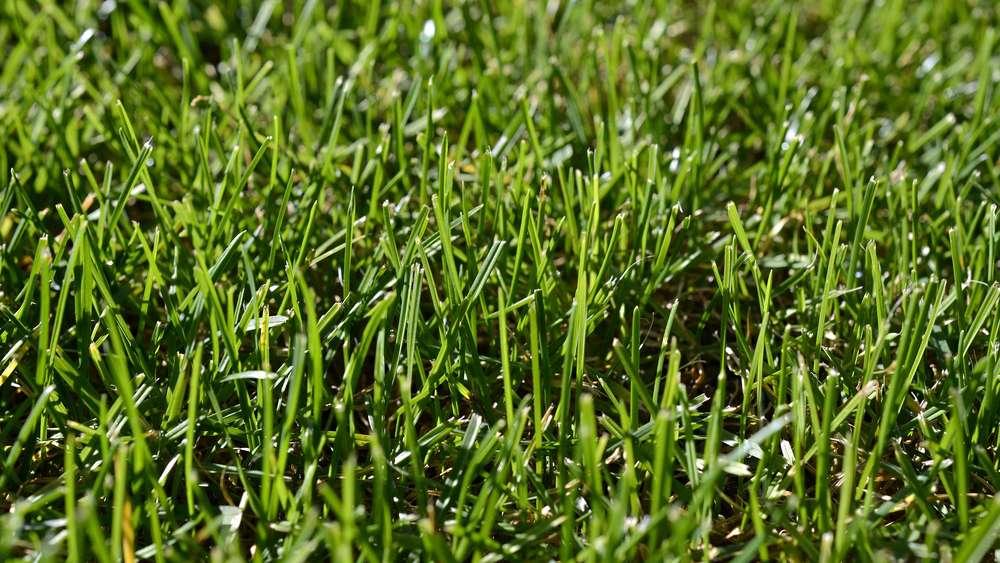 Rasen Säen Wann Ist Der Beste Zeitpunkt Wohnen