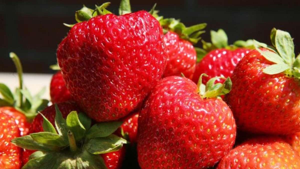 Kühlschrank Ins Auto Legen : Erdbeeren ungewaschen in den kühlschrank legen genuss