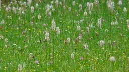 Unkraut Im Rasen Vernichten: So Funktioniert Es Mit Und Ohne Chemie