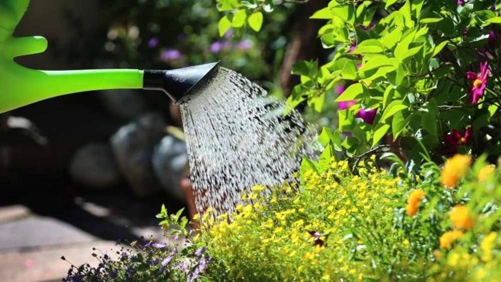 Durstige Pflanzen Bei Hitze Richtig Giessen Leben