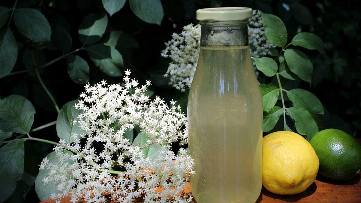 Holunderblütensirup: Sommerliche Erfrischung für Klein und Groß