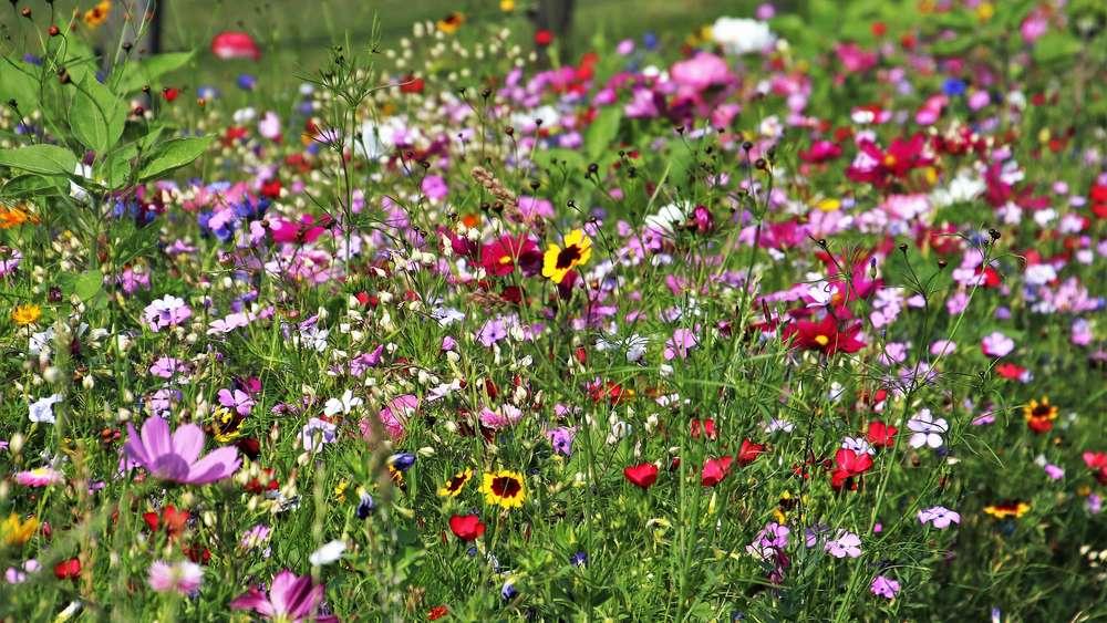 Artenvielfalt Im Garten So Schaffen Sie Lebensraum Für Tiere Und