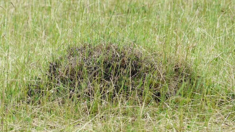 Ameisen Im Rasen Bekämpfen Diese Hausmittel Helfen Auf Natürliche