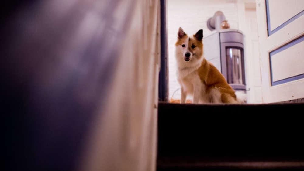 Paar Möchte Hund In Wohnung Halten Vermieterin Schlägt