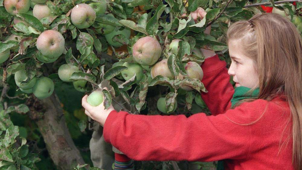 Reiche Ernte Obstgärtner Jubeln Aber Experten Dämpfen Die Euphorie