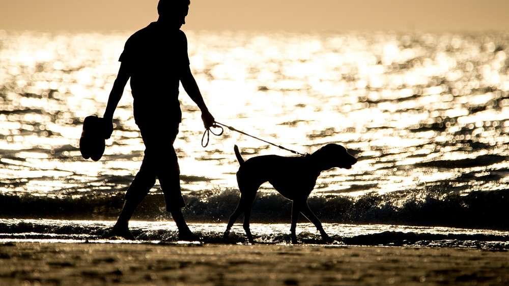 Urlaub Mit Hund Urlaubstraum Mit Vierbeiner Im Herbst An Nord Und