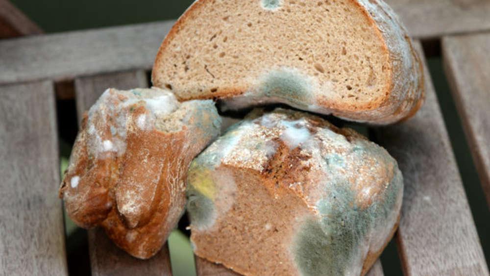 Foyer Des Arts Schimmliges Brot : Schimmel warum er so gefährlich ist und was sie nach