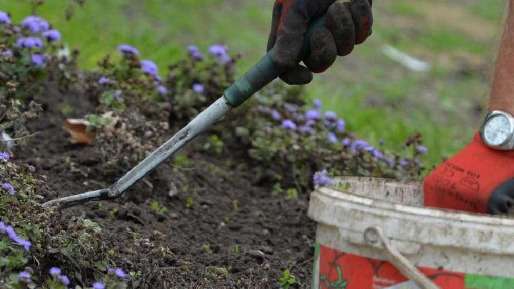 Eine Analyse Des Gartenbodens Hilft Bei Der Düngung Wohnen