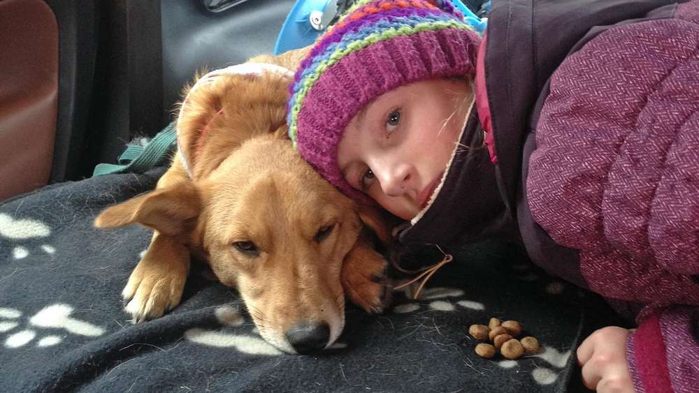 Bayernschneizlreuth Hunde Wunder Teddy Kehrt Durch Winter