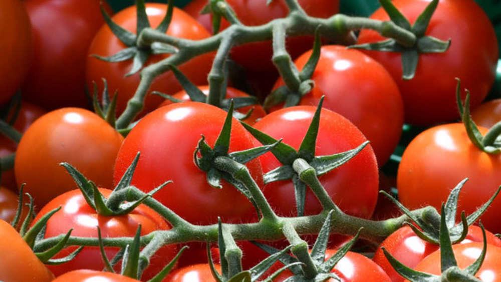 Beliebt Bevorzugt Tomaten pflanzen: Alles, was Sie zu Zeitpunkt und Standort @IQ_78