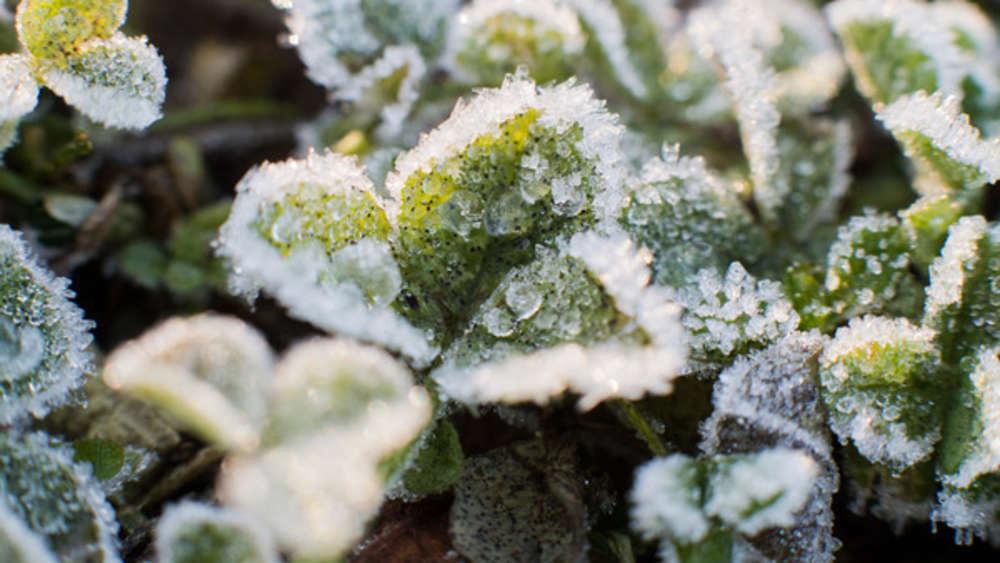 Pflanzen überwintern: Diese Blumen sollten Sie ab jetzt ins Haus holen