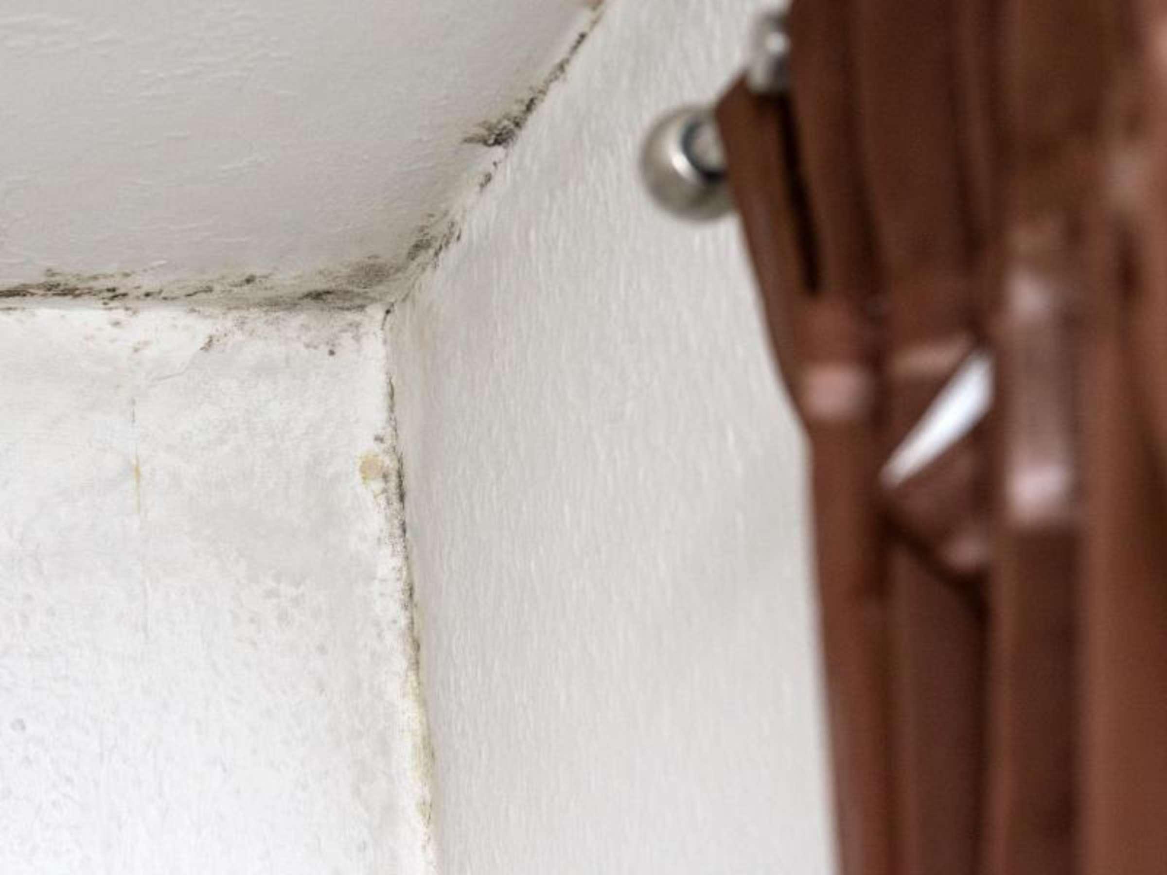 Flecken an der Decke nicht einfach überstreichen  Wohnen