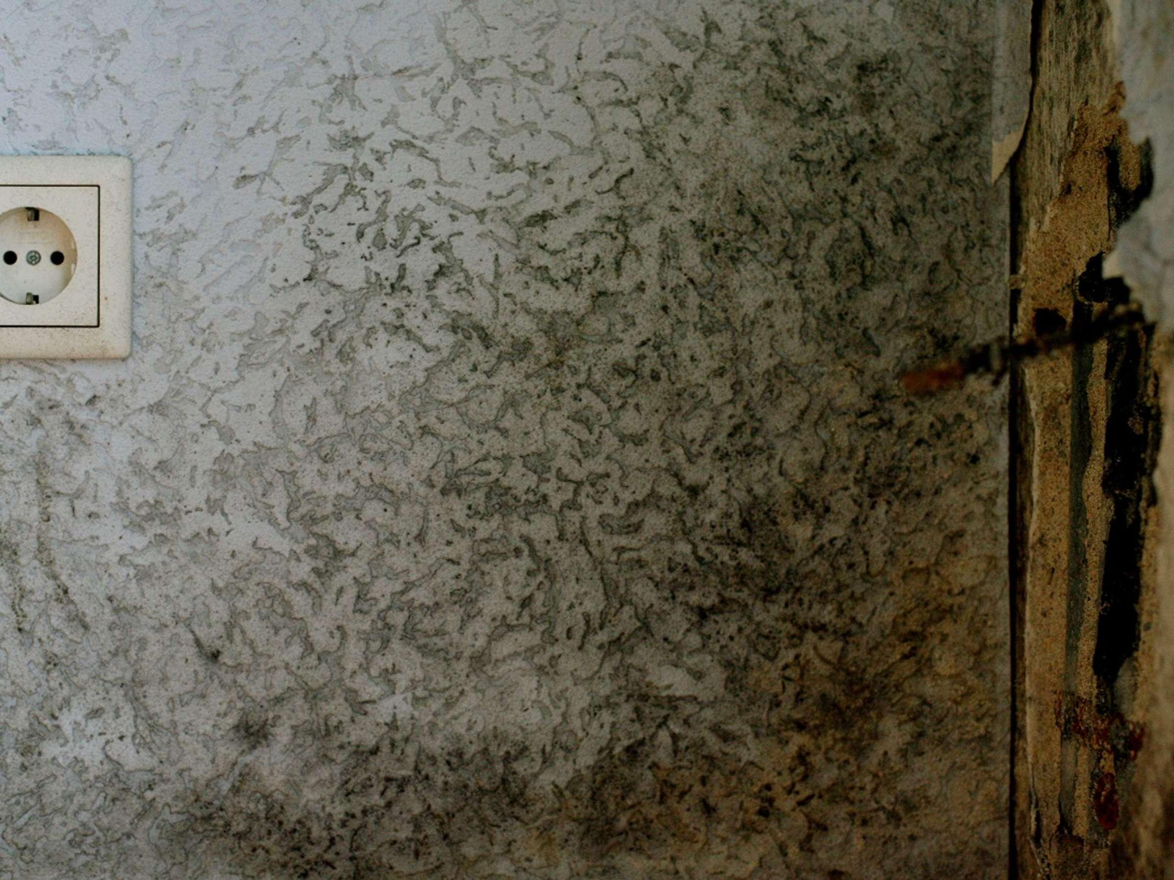 Schimmel an der Wand entfernen So ist Schluss mit den schwarzen ...