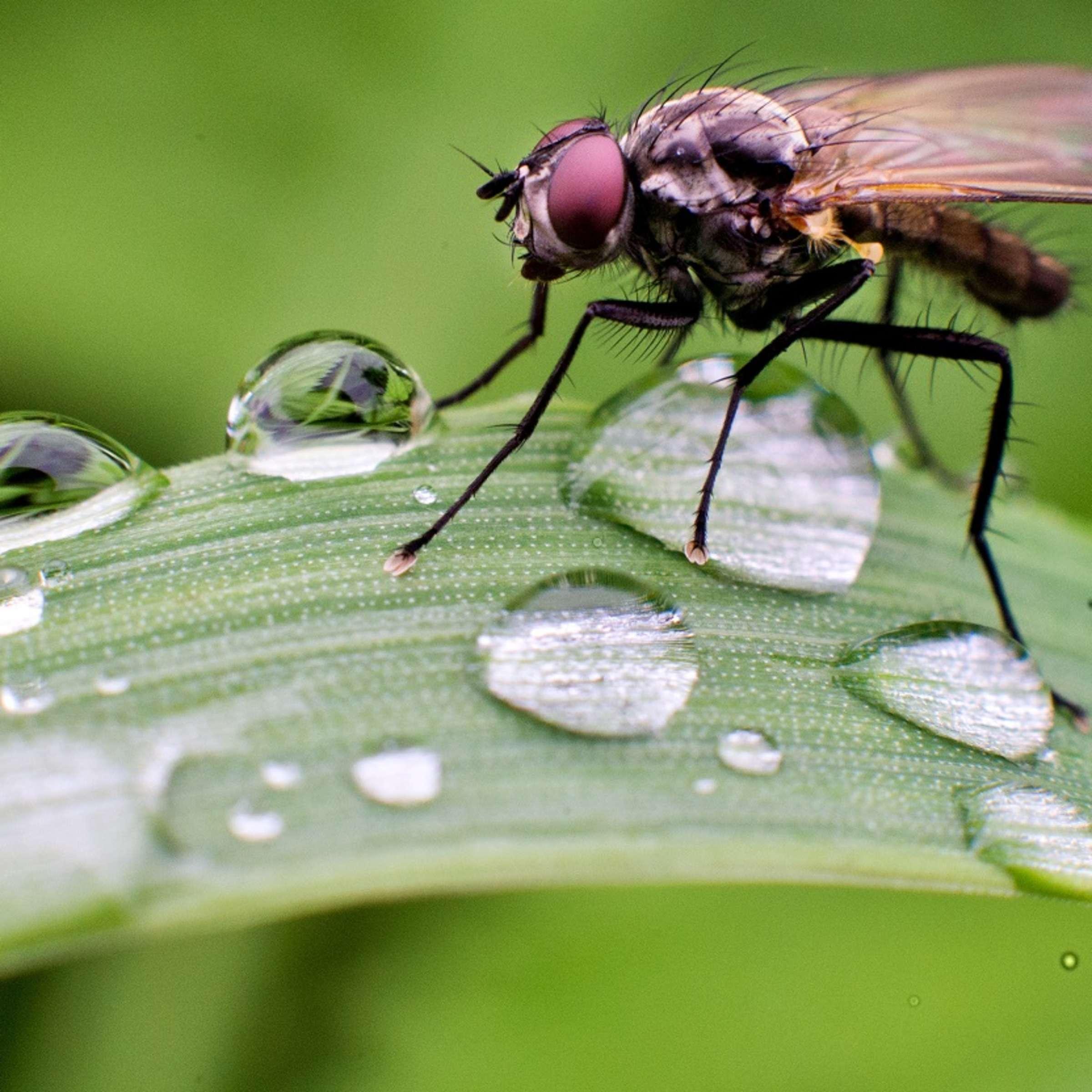 Fliegen vertreiben ohne viel Aufwand - dieser Trick könnte die
