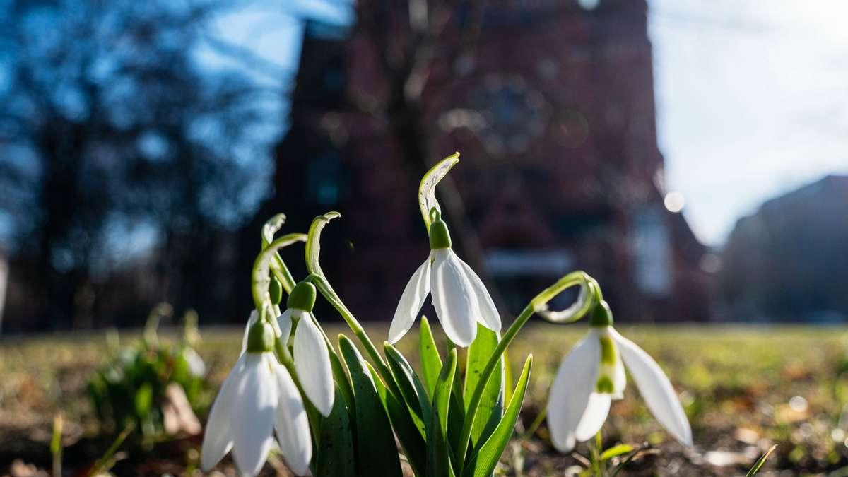 Wetter in Deutschland: Naht der März-Winter? Polarwirbel könnte Frühlings-Hoffnung auf Eis legen - Merkur.de