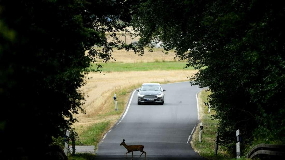Wildwechsel: So verhalten sich Verkehrsteilnehmer richtig